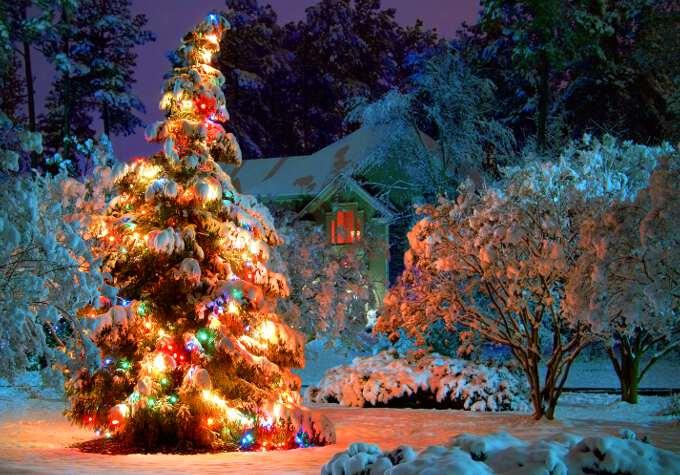 новогодняя елка на улице